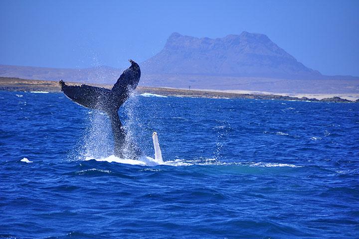 coda balene boavista