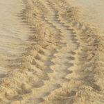 Spuren von Schildkröten Boavista