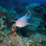 snorkeling boavista