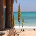 boca beach (8)